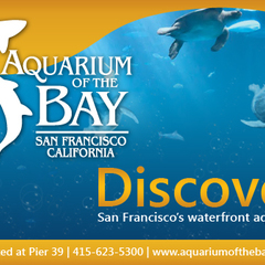 Hire Nadiia Sydorova - Portfolio - Aquarium by the bay banner ad