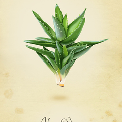 Hire Bogdan Lucut - Portfolio - Aloe Vera Illustration